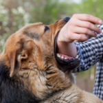 Liability for Your Dog